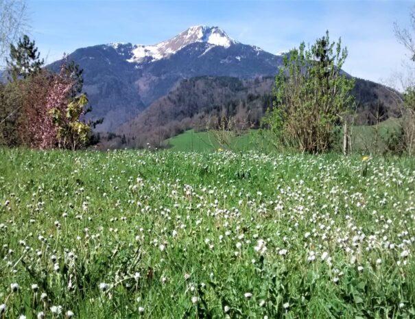 1_Alpine_flowers_at_Chalet_Le_Moulin